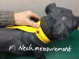 Measurement F